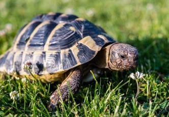 turtle-3422221_1280