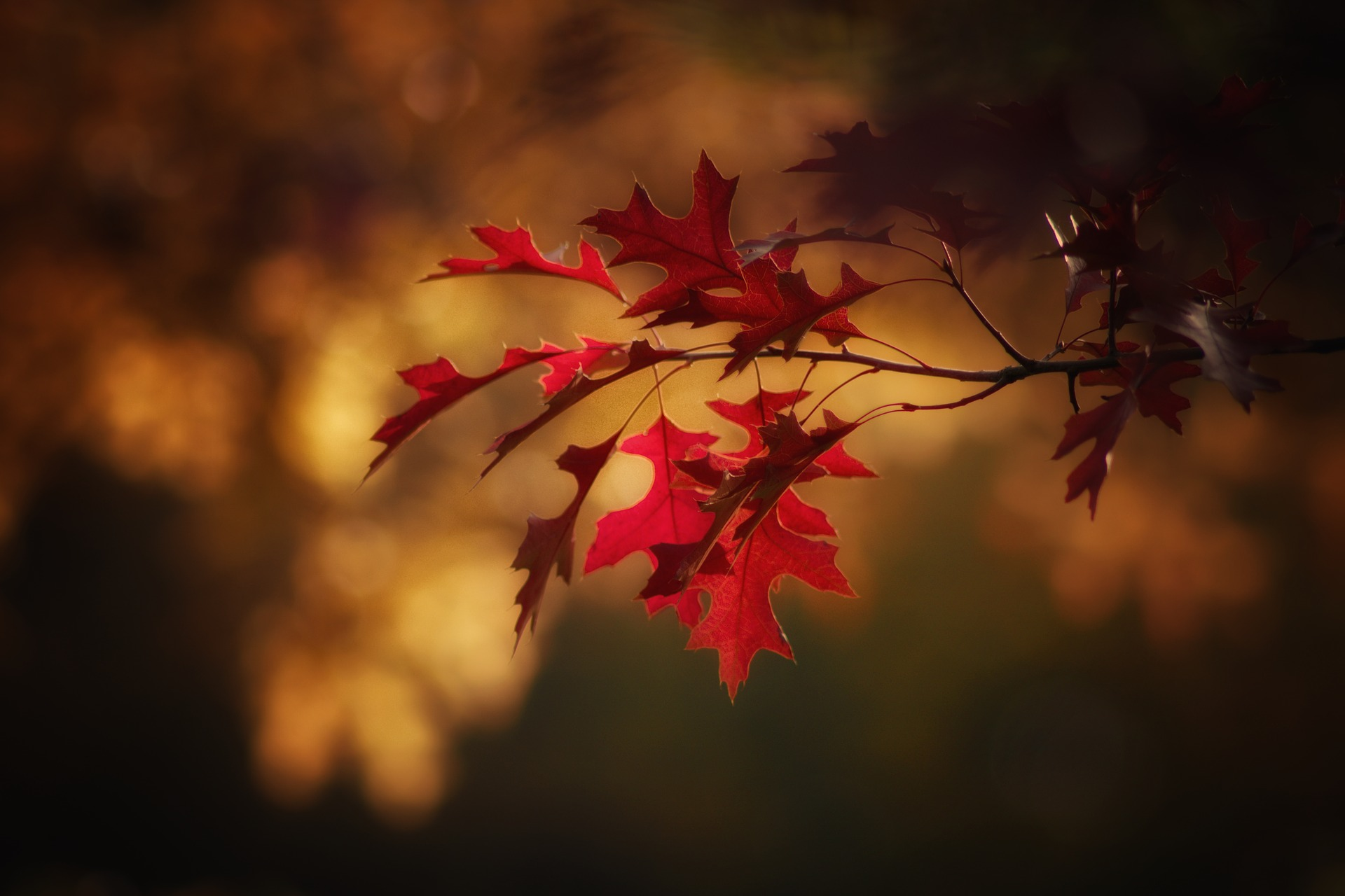 maple-leaves-2895335_1920 (1)